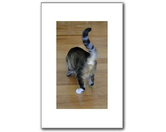 Tabby Cat - Cat Prints - Pet Portraits - 11 x 17