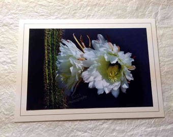 Hand Made Blank Photo Note Card-15 cactus flowers