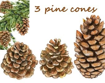 pine cone clipart, fall elements, fall clipart, pine cone digital, Christmas clipart, Christmas elements, watercolor pine cone, commercial