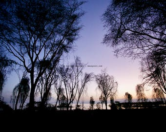 Lake Naivasha, Kenya, East Africa • Trees at dusk • Landscape photograph printed on canvas