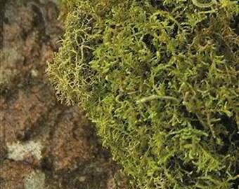 Dried Sheet Moss | Bulk Dried Moss | Dried Decorative Moss | Dried Decor