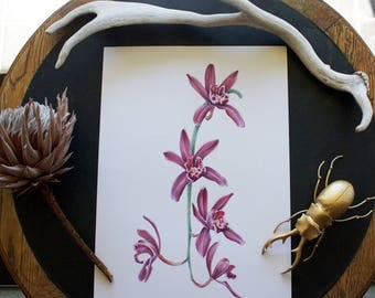 Cascading Orchid Print