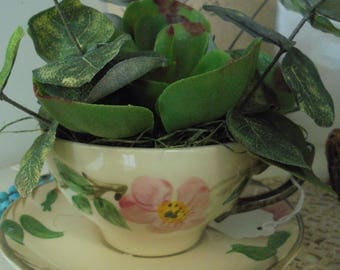 Vintage Desert Rose Teacup / Succulents
