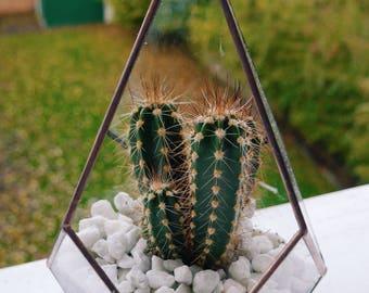 Diamond Copper Terrarium & Cactus