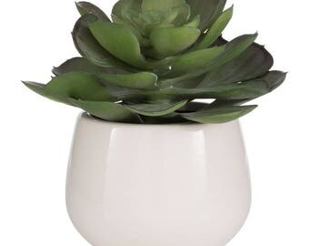 Potted Succulent Green Plant