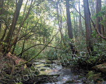 Conasauga River - Cohutta Wilderness GA #3