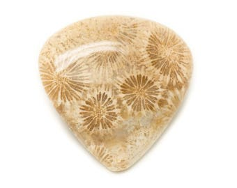 No. 48 - Cabochon stone - coral fossil drop 35x34mm - 8741140006867