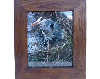 Photo of heron framed in rustic teak picture frame photo frame, Reiher Foto im Teakholz Bilderrahmen, photo de héron en image en teck