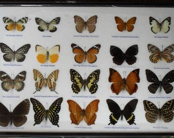 REAL 20 Butterflies Wall Decor Housewares Collectible TAXIDERMY Framed /BTF13X