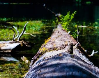 Log Into Water Print