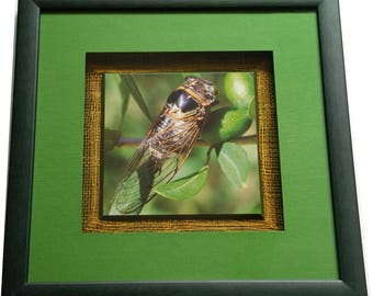 Frame with a card depicting a picture of cicada