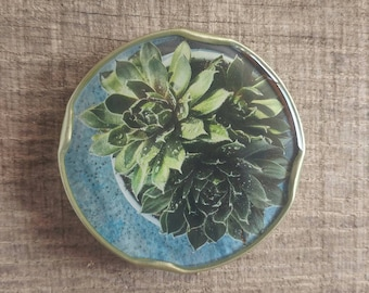 Potted Echeveria gift magnet