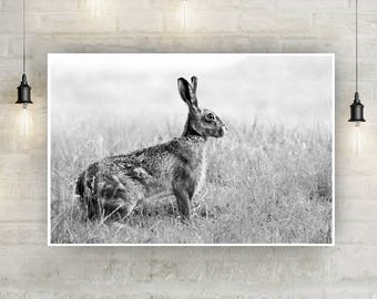 Hare Black and White Digital Download, British, Brown Hare, Nature, Wildlife, Outdoors, Instant Download, Wall Art, Decorative, Animals