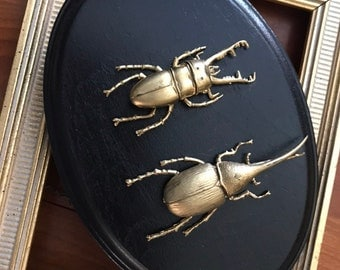 Double Faux Taxidermy Beetle Wall Hanging, unusual gift or oddity for your office/study, or just a fabulous conversation piece!