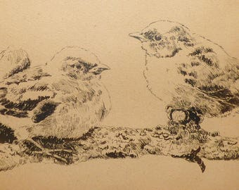 """Finches"" ink drawing"