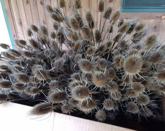 Teasel - Dried Teasel Stalks - Dried Thistle Stalks - Bulk Teasel Stalks For Crafts Wreaths Or Floral Arrangements- 230 Pieces