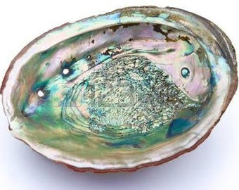 Large Abalone Shell 5 to 6 inch -  for smudging, burning sage smudge incense resin, energy clearing, cleansing, house warming gift, decor