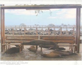 Galapagos Photography Collection - Sealion Family at Bus Stop