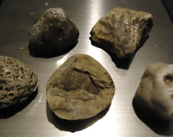 5 Michigan Fossils - 7.5 oz. combined weight -Petoskey Stone & more  Lot #1