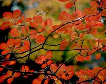 Delicate Foliage