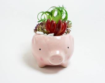 Baby Piggy Charisma Fake Succulent Arrangement