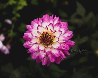 """6""""x6"""" Floral Canvas"""