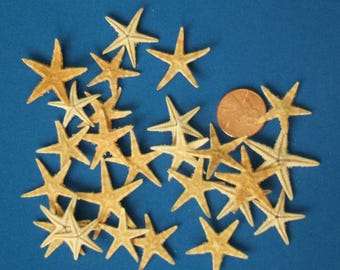 Small Starfish, Set of 25 Genuine Starfish, DIY Wedding Crafts, Sailors Valentine, Make your own Shell Crafts, Mermaid Party Decorations