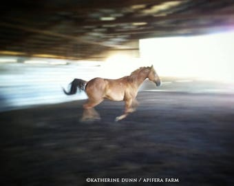 Horse in flight