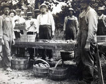 vintage photo 1920 Apple Picking Farmers Bushel Basket of Fruit
