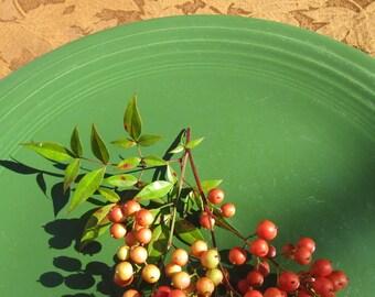 "Vintage Fiesta Forest Green Serving Plate - 1950s Homer Loughlin Fiestaware Plate - 14"" Cake Plate"