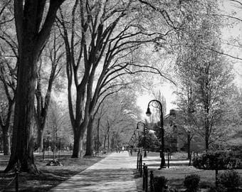 40% OFF SALE Penn State Photography, Black and White Picture, Graduation, Landscape, Campus, Elm Trees, State College, Nature -8x10 inch Pri