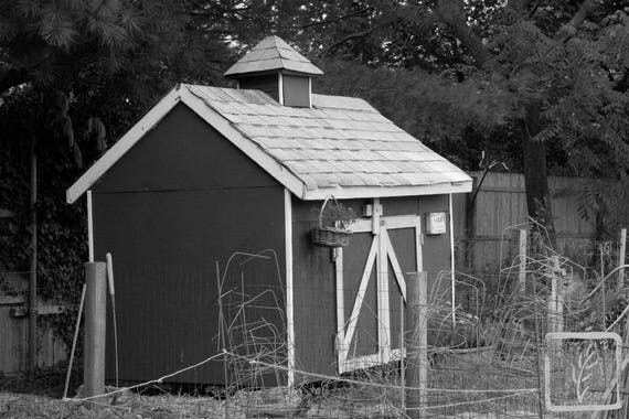"""Chicken Shed,"" Lewis Oliver Farm, Northport, New York, 2016."