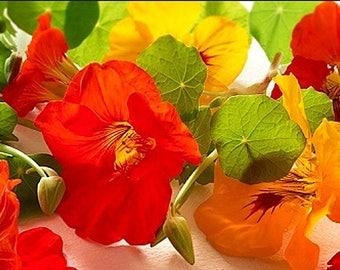 YOUR CHOICE Eight Packs - Save 20% Organic Heirloom Gardening Seeds Vegetable Herb Flower