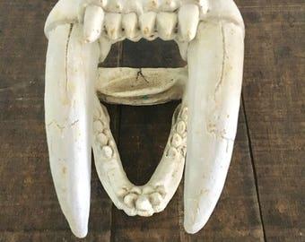 Vintage saber tooth tiger skull