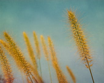 South Wind, long grass, yellow, swaying in the wind, Fine Art Photograph, 8x10