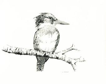 Kingfisher 8 x 10 Original Hand Drawn Sketch