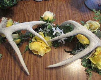 Free Shipping! Pair of 2 Real Deer Antlers Naturally Distressed Wedding Table Decoration Large Shed Authentic Whitetail Horns 4/4 Point A14