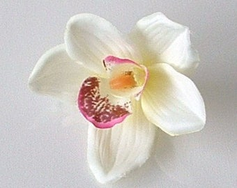 Cream with a Hint of Pink Orchid
