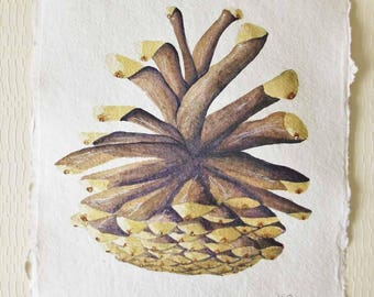 Pine cone original watercolour painting illustration nature painting natural history