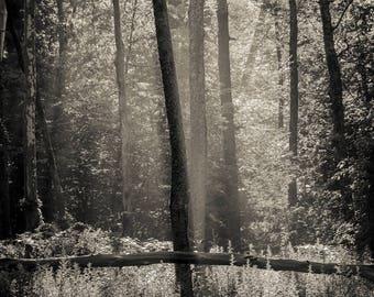 morning light2, 8x10 fine art black & white photograph, nature