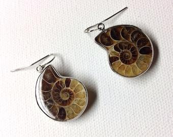 Ammonite Fossil Earrings