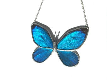 Blue Morpho Real Full Butterfly Necklace xl