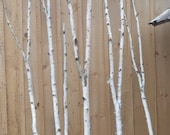 Birch Forked Pole