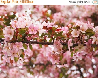 ON SALE Pink Crabapple Blossoms, Floral Print, Pink and White Blossoms, Fine Art Photography, Dreamy Pink, Pink Decor, Mothers Day Sale