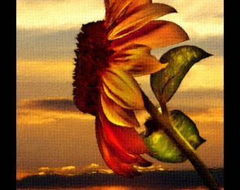 SUNFLOWER SUNSET,(photographic art),Sunflower,Sunset,Flower,Scenic,Abstract,Seeds,Oil,Enviromental,Organic,Natural,Nature,,Colorful,Calming