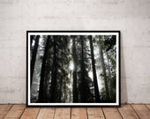 redwood photography print...