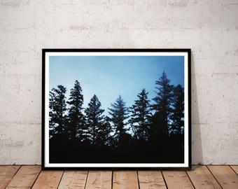 "redwood photography print / black blue large wall art / minimal nature woods forest California landscape photo print / ""seven redwoods 2"""