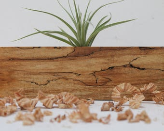 Spalted Maple Air Plant Holder   M07