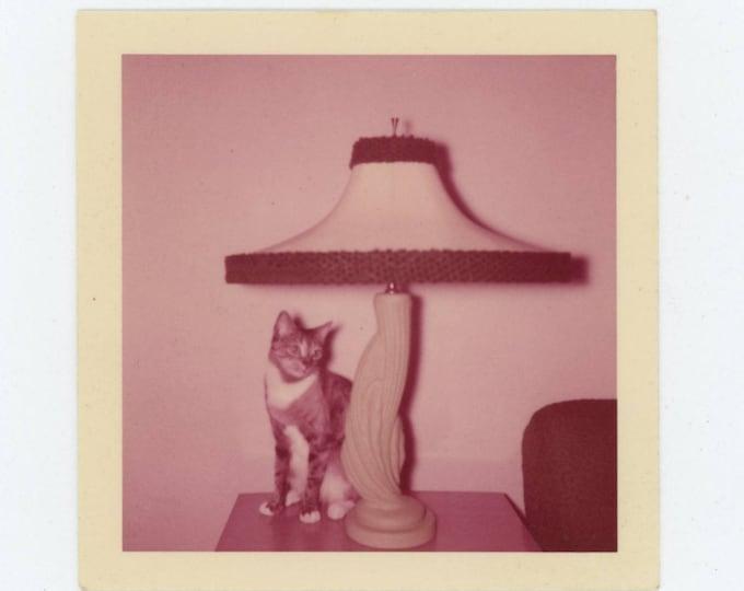 Vintage 1956 Kodacolor Print Snapshot Photo: Cat & Lamp (710614)