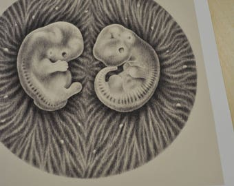 Homo sapiens / mus musculus